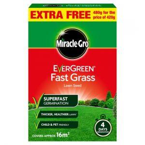 Fast Grass 4 Day Gemination Lawn Seed (20 Sq.M)